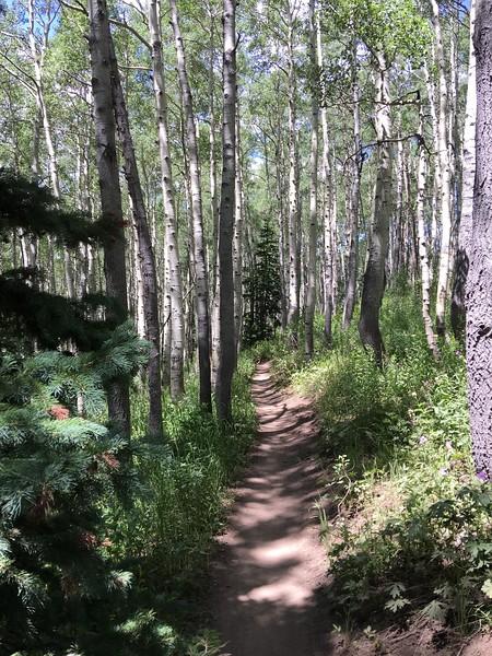crest trail 1
