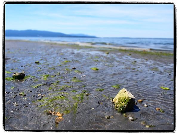 Low Tide at Marine Park