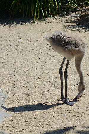 7/21/2016 - San Diego Zoo