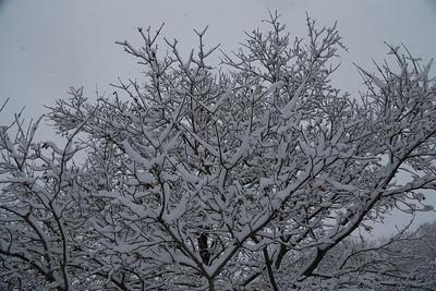 2016-12-13 snow