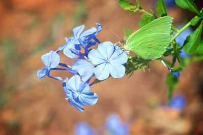 Plumbago - we love the blue color, and get one each year if we can find it.