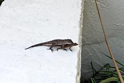 Lizard Love - Eek!