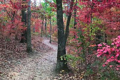 Sope Creek Trails in Autumn