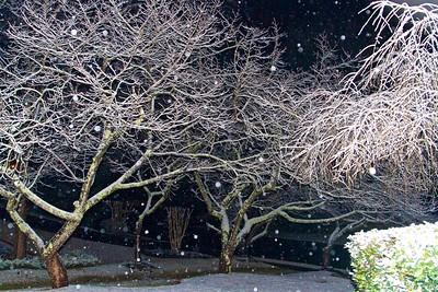 1/22 - Snow Night