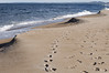 Walk on Plum Island Beach with ETS in honor of Bailey See.