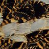 American Woodcock - male