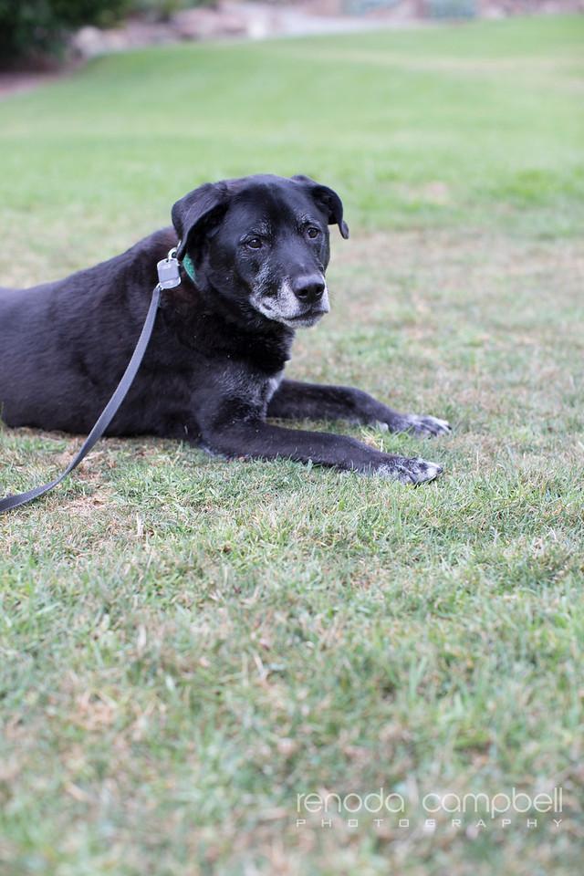 MG pet portraits_Renoda Campbell Photography-3582