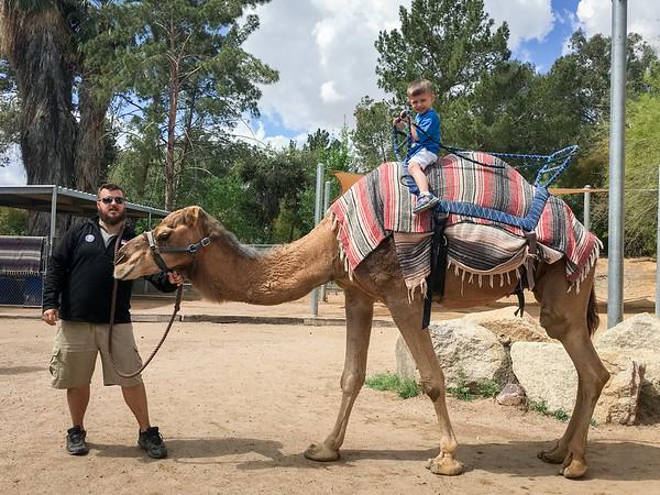 CamelRideAtPhoenixZoo03-23-17