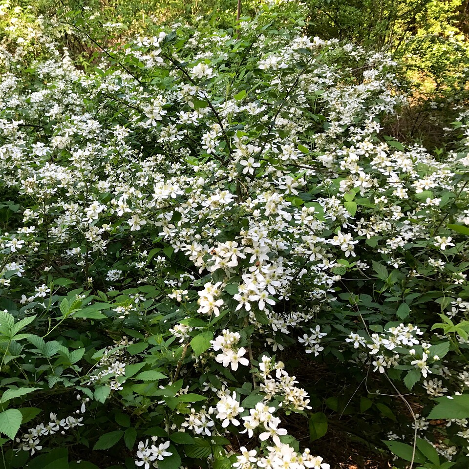 White flowers everywhere