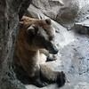 MN Zoo