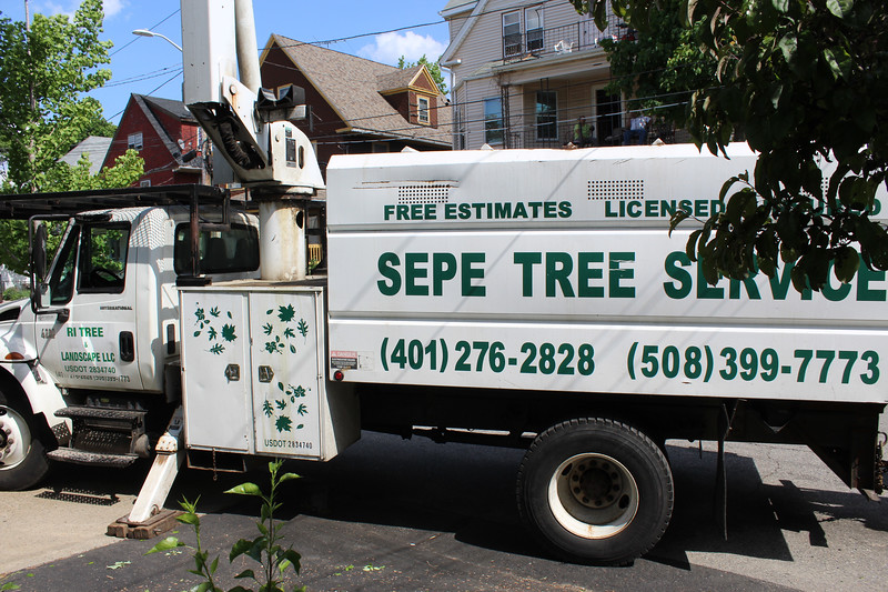 City Forrester Doug Still recommended several excellent tree companies. Sepe did a good job at a reasonable price for our big red maple and a smaller choke cherry on the other side.