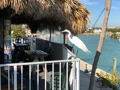 Big Bird Burdines Restaurant Marathon Florida Keys January 2018
