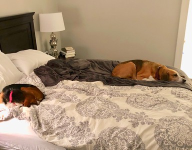Shiloh & Cooper Exhausted After Day At Doggie Camp 12/17/18