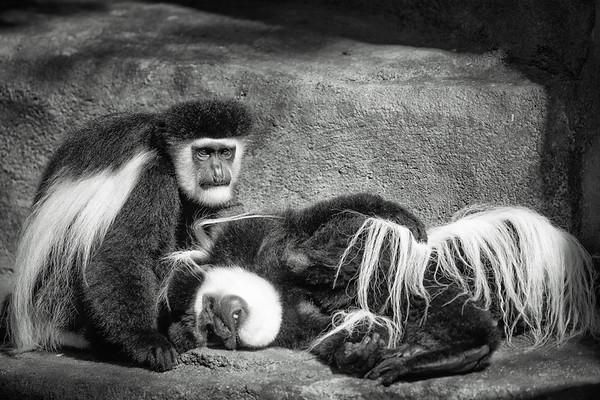 2018 Cincinnati Zoo