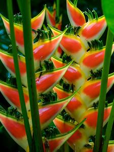 Botanical Gardens, St. Lucia