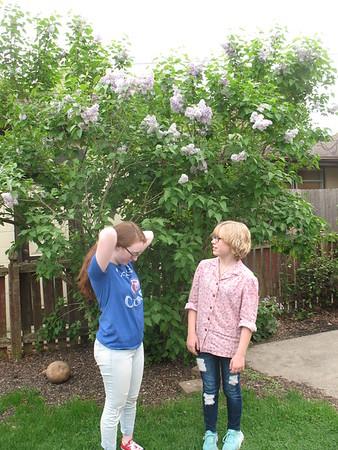 2018-05-11 Lilac Bush Photos