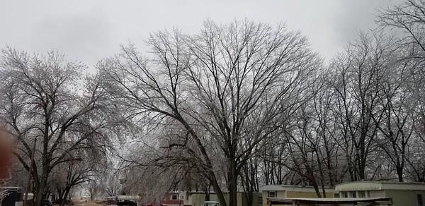 2018-03-17 White Trees