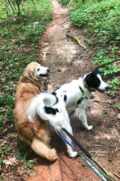 Back to Sope Creek Trails