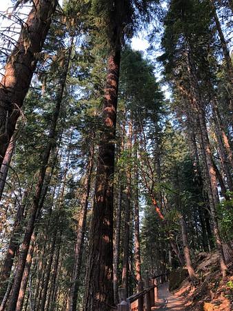 2018.08.11 Oregon