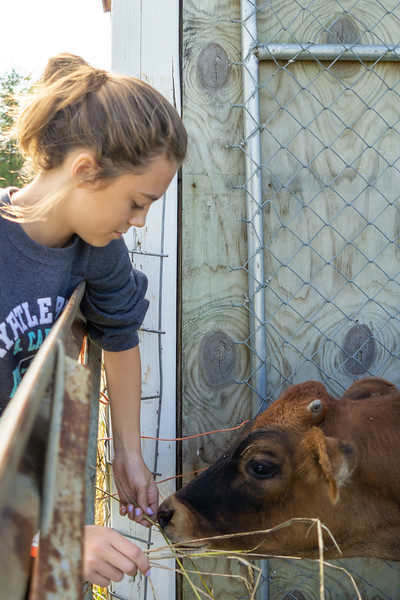 Ella and the Cow