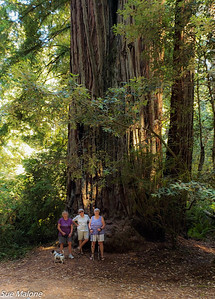 Mo, Nickie, and Sue enjoying the redwoods