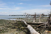Pier at Pt. Pinole Regional Shoreline,  5/15/20