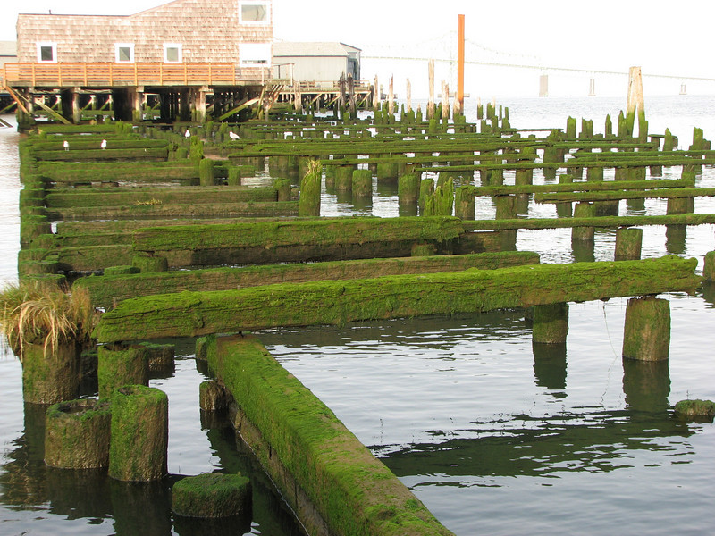 'Nuther mossy pilings shot.