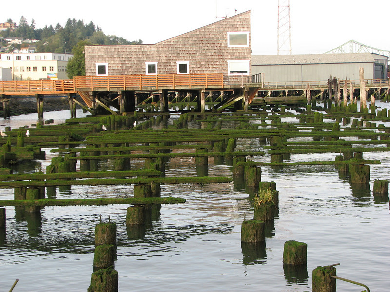Moss on the pilings.  I'm guessing they get lots of fog, rain and other types of water in the air.