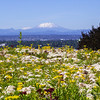 View across living roof to Mt. Hood and Rainier