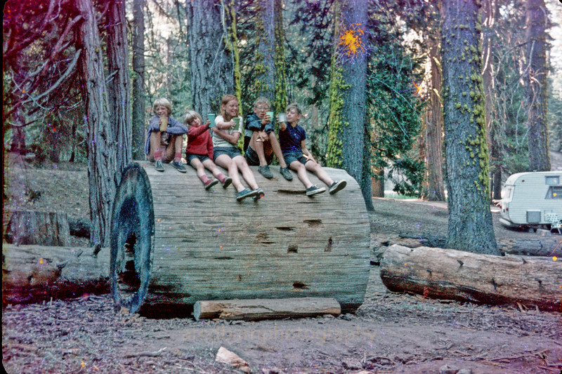 Yosemite, one of the camp grounds,Iwas not able to find this spot,some of the side pictures my dad or my brother Jim took 45 years ago ,They didn't survive all the moves and storage well.