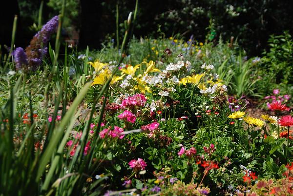 12 April 06 Dallas Arboretum