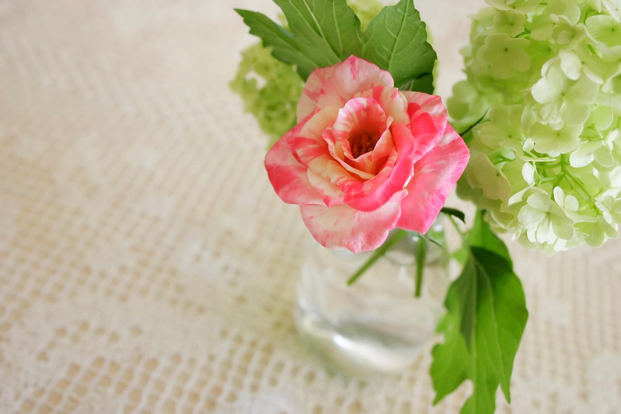 2006 10 09 IMG_9378 Viburnum and Rose