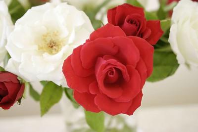 2005 02 14 Valentine's day IMG_3769