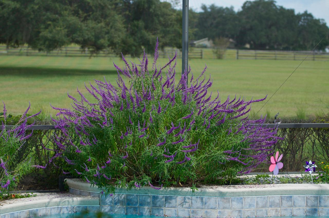 plant in Allison & Rick's pool enclosure
