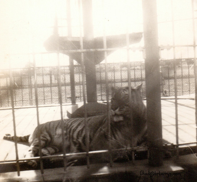 Mike the Tiger old cage