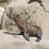 Sea Lion Pup born July 14th