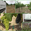 Entrance to Adastra Wines - a Certified Organic Vineyard.
