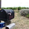 Adastra,2545 Las Amigas Rd., Napa, CA 94559