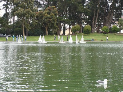 Then we went to see the model sail boat club. There were all these old men driving remote control boats around the pond.