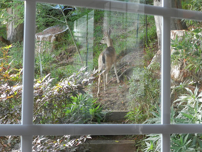A visitor looked into the dining room!