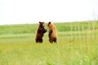 07-06 Katmai Park Bears