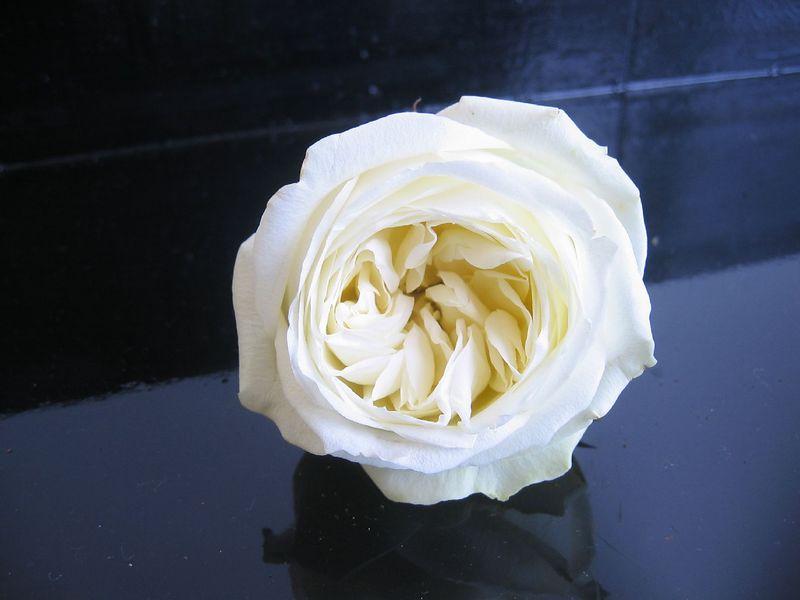 One last flower in memory of Laurel.