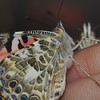close-up-butterfly_hand
