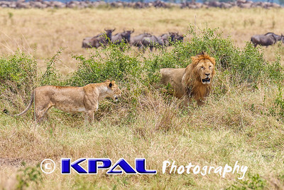 Africa Safari 2016