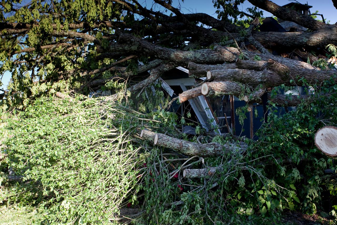 Cutting away at the Big Oak