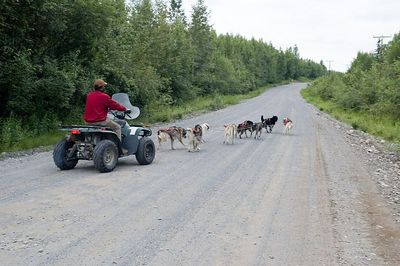 The dogs pulling an unpowered ATV.  This is how they train in the summer.  The musher sits in the ATV and simulates the dog sled.