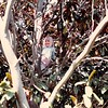 April 1984<br /> 262 Marich Way, Los Altos, CA<br /> Teresa (5) climbing the tree