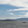 1-05<br /> whale watching trip on Sanctuary Cruises