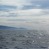 """1-05<br /> whale watching trip on Sanctuary Cruises<br /> you can see the """"blow holes"""" in the air"""