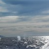 """1-05<br /> whale watching trip<br /> you can see the """"blow holes"""" in the air"""